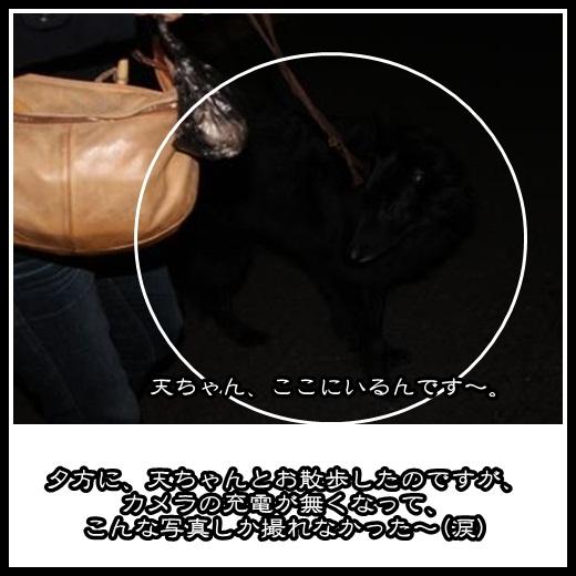 92_20130209144946.jpg