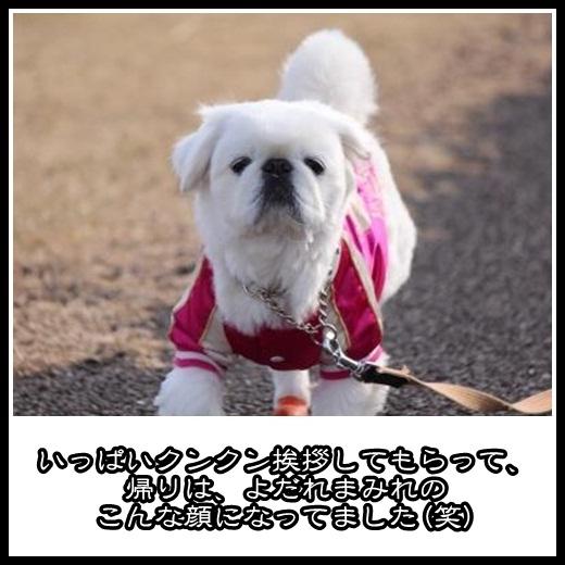 93_20130223125230.jpg