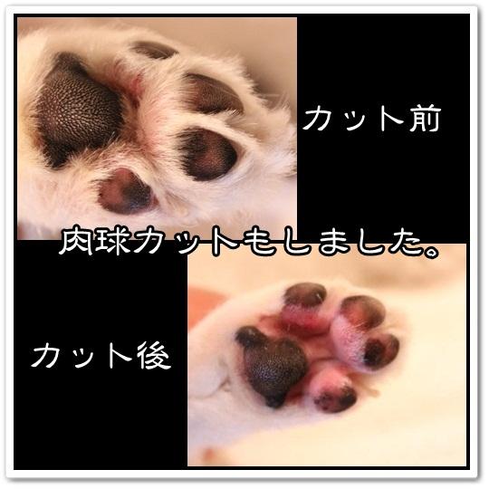 96_20120714161048.jpg