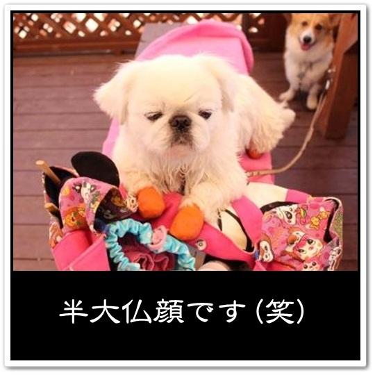 9_20120714160843.jpg