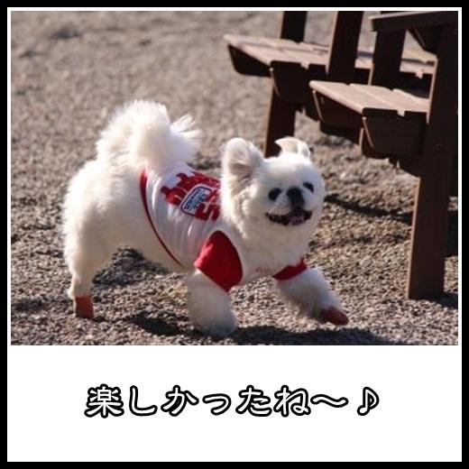 9_20130204133313.jpg