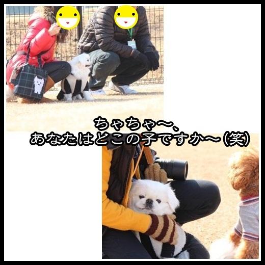 9_20130219095859.jpg