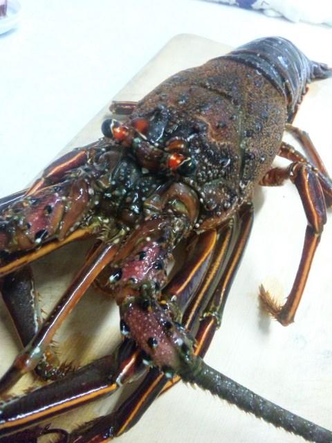 【海鮮料理】伊勢エビを料理する