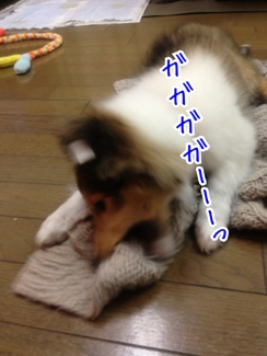 fc2blog_20140119202527633.jpg