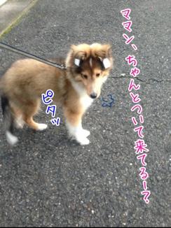fc2blog_20140127192617da4.jpg