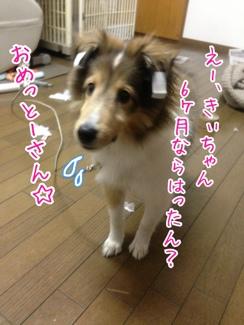 fc2blog_20140131053157aa4.jpg