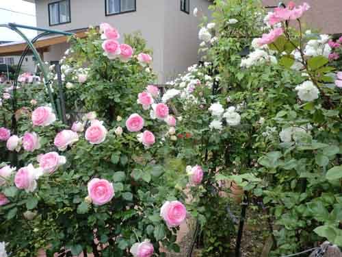 2012_0616_171845-CIMG4678.jpg