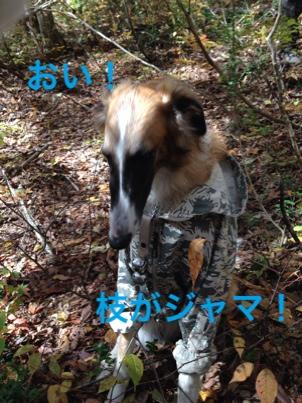 fc2blog_201410261224531ad.jpg