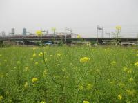 阪急王国の春