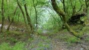 20120512丹沢湖13