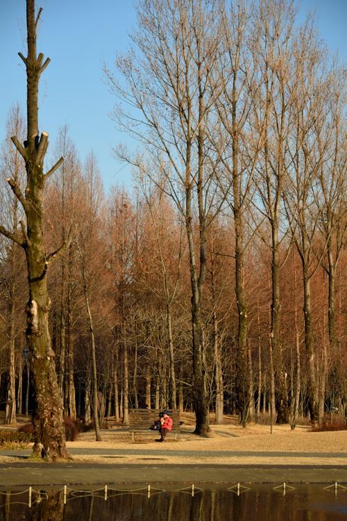 彩の森入間公園1