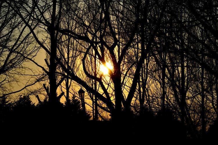 彩の森入間公園3(夕景3)