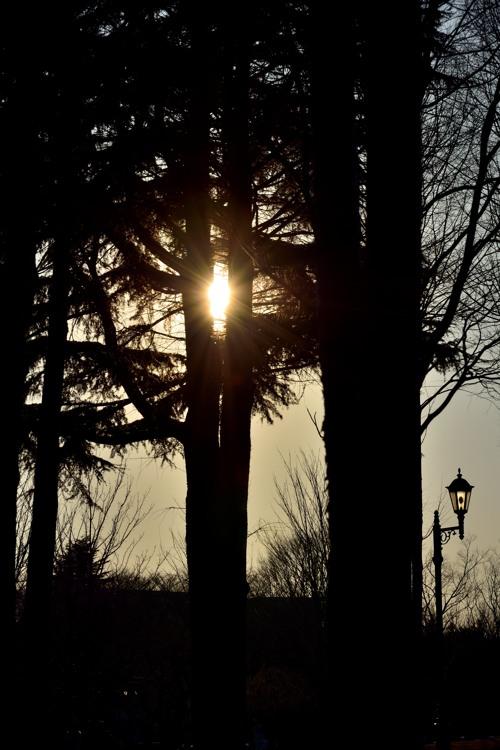 彩の森入間公園3(夕景2)