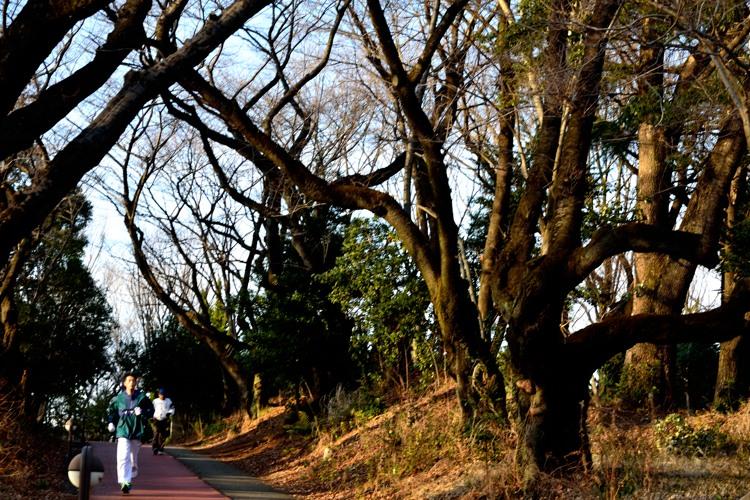 所沢航空記念公園1