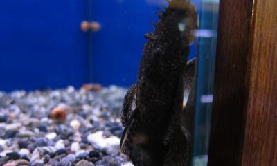 ブッシープレコ 親子亀