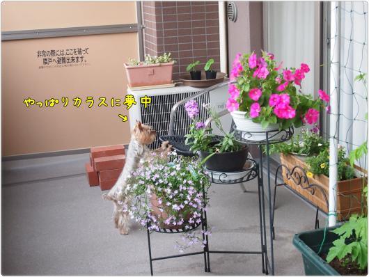 P5312522_convert_20120531222638.jpg