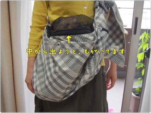 P6022720_convert_20120613224018.jpg