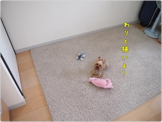 P6093230_convert_20120609233717.jpg