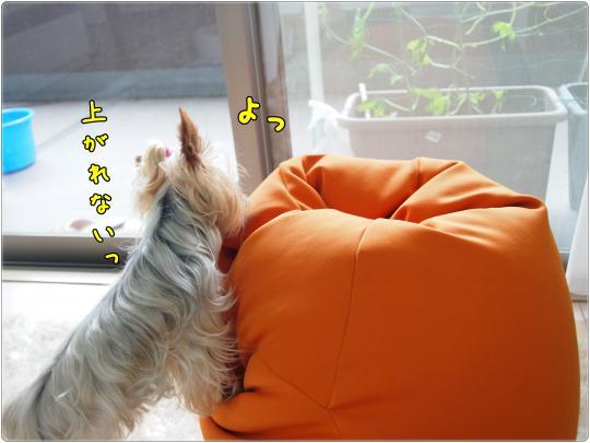 P6234846_convert_20120623181218.jpg