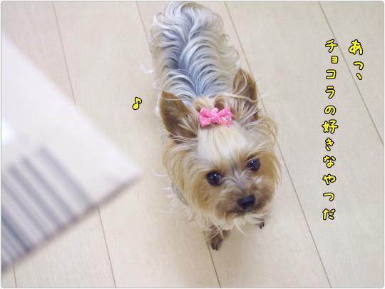 P6235009_convert_20120624013124.jpg