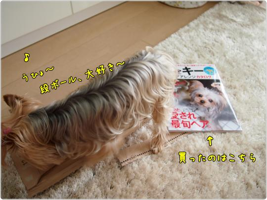 P6235033_convert_20120624013703.jpg