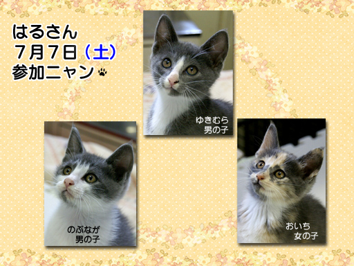 05_201207_haru.jpg