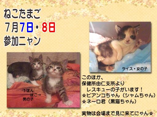 05_201207_nekotama.jpg