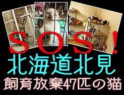 banner_kitami47cats.jpg