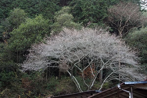 浄源寺-9