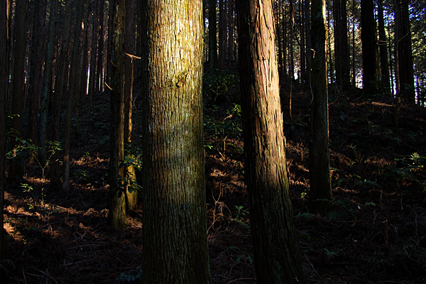 海上の森2-5