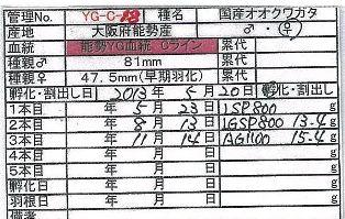 BS-YG-C18.jpg