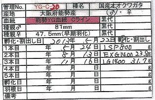 BS-YG-C20.jpg