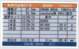 YG-871-12YGA502card-up2.jpg