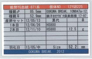 YG-871-12YGB225card-up.jpg
