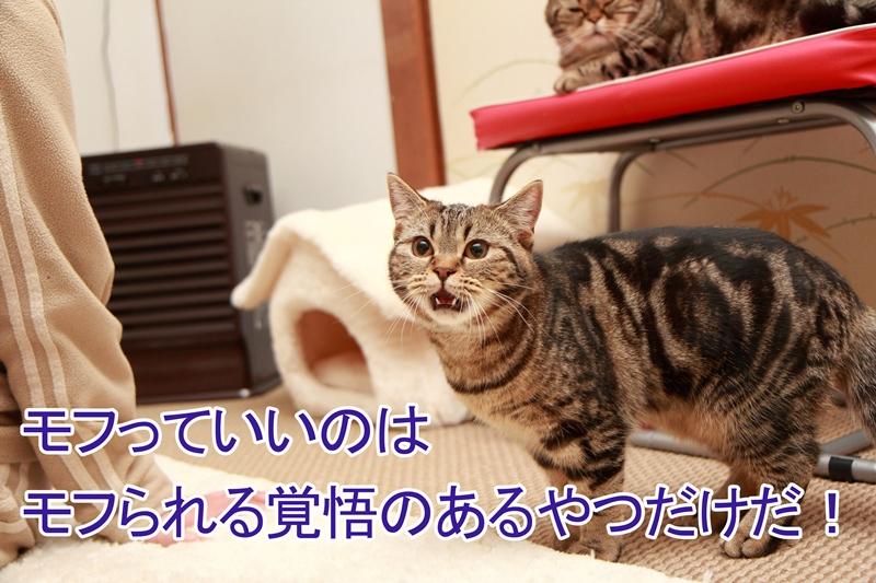 IMG_37391.jpg