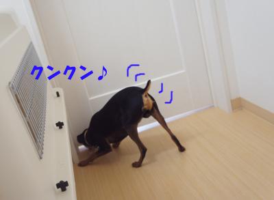 20121111164150e0a.jpg