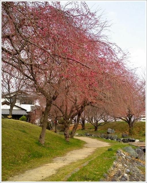 散歩道と庭の花