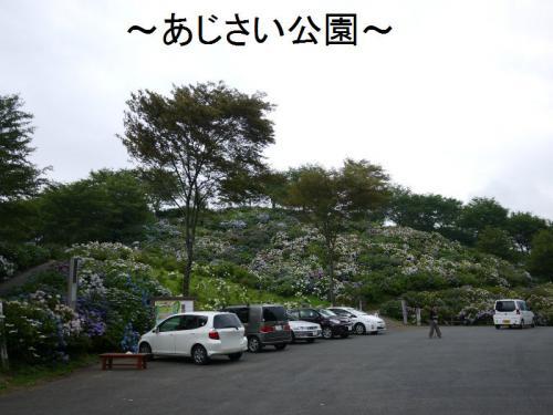 あじさい公園1