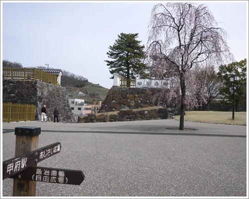 甲府・舞鶴城公園の桜