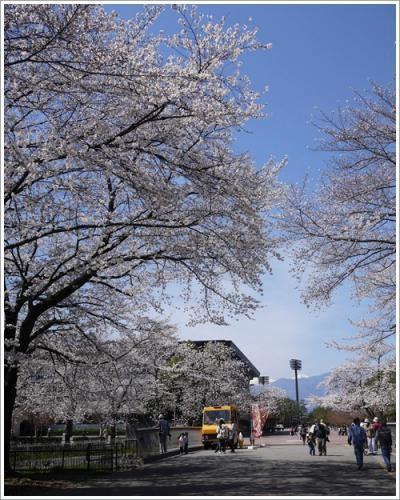 小瀬スポーツ公園2