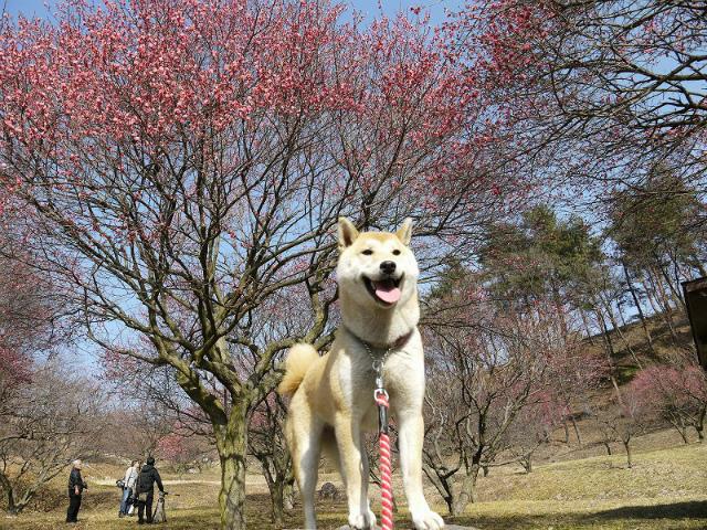 敷島総合公園deお散歩