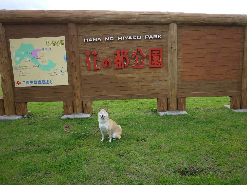山中湖・花の都公園をご案内します♪