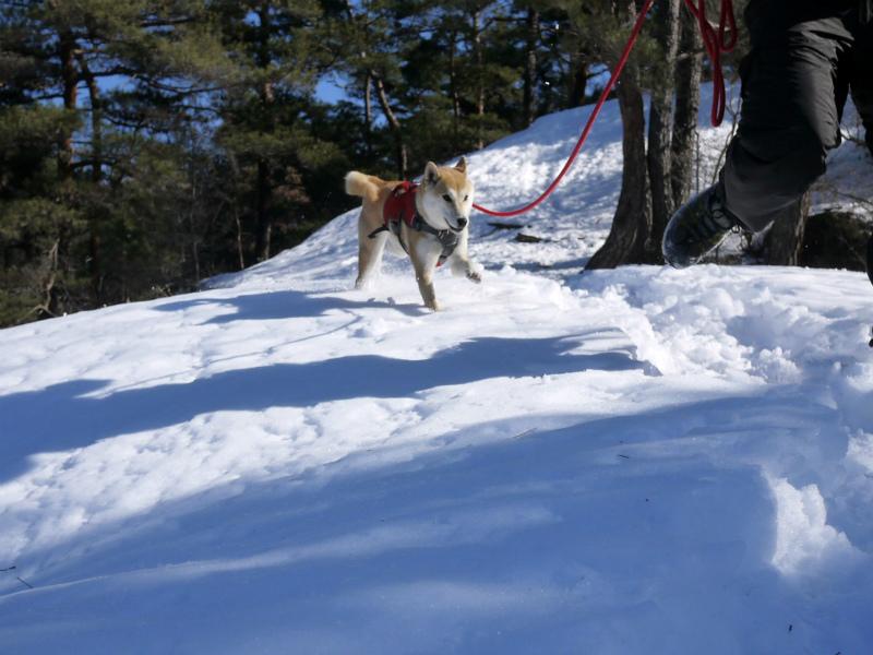 里山で雪遊び