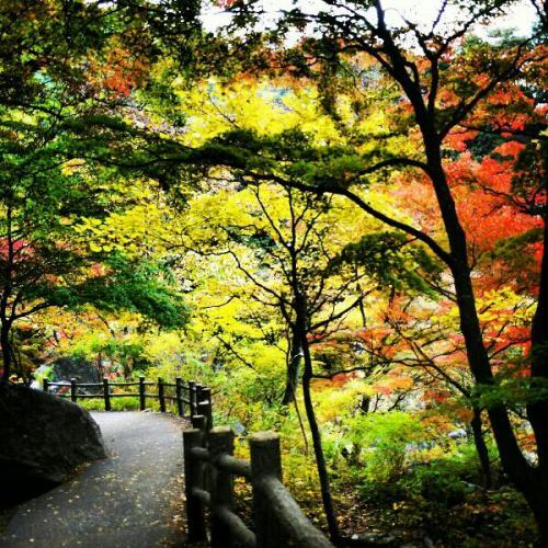 fc2blog_2012110410130725e.jpeg