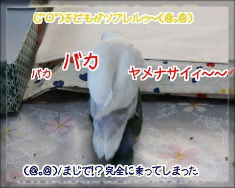 2014012021095212a.jpg