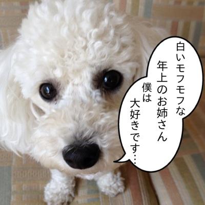 fc2blog_20120712143525a42.jpg