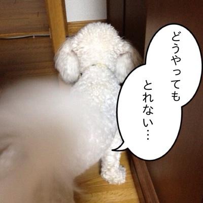 fc2blog_2012071919355459b.jpg