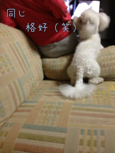 fc2blog_2012073022000817f.jpg