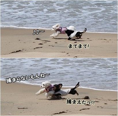 浜辺をかけっこ♪ すもも&ちくわ