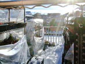 大雪2日後のベランダ~大分溶けてました。気温が上がりそうなので早々ビニール開けます♪2014.02.16